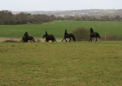 Mares in Big Field april 2012 009