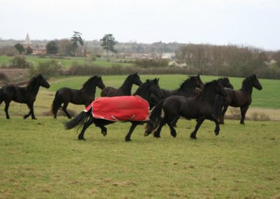Mares in Big Field april 2012 043