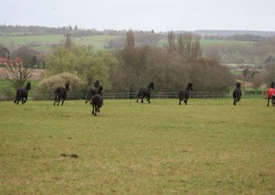 Mares in Big Field april 2012 095